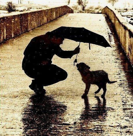 dog and rain